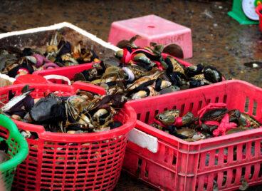 Chợ 'chồm hỗm' bán cá giá rẻ nhất Sài Gòn