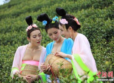 Mỹ nữ Trung Quốc hái chè trong trang phục cung đình