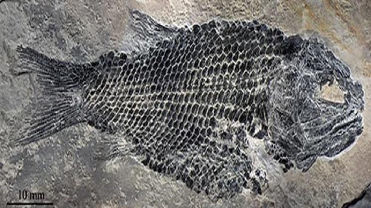Cá hóa thạch hơn 200 triệu năm tìm thấy ở Trung Quốc