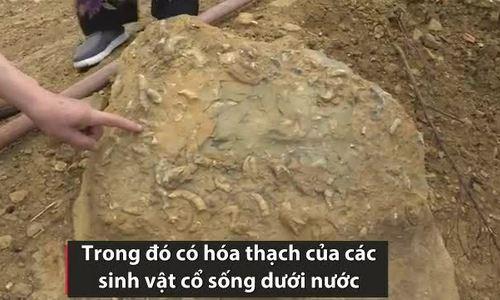 Khu hóa thạch 300 triệu năm tuổi ở Trung Quốc