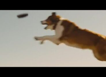 100 chú chó cùng chủ đến rạp xem phim ở Trung Quốc