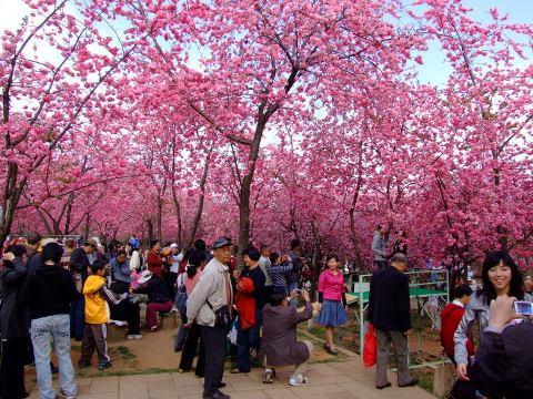 Rực rỡ lễ hội hoa ở Côn Minh, Trung Quốc