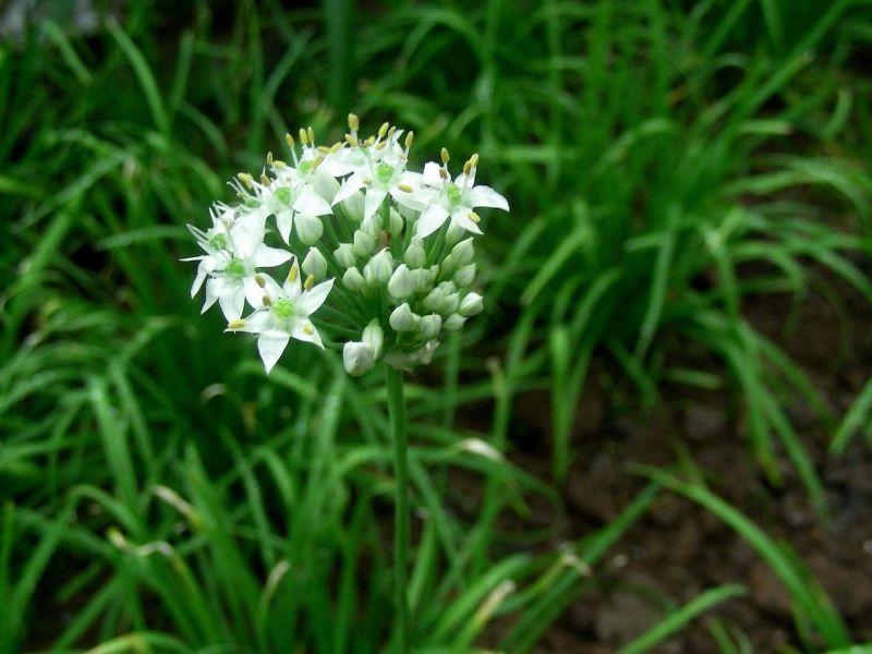 13 loài hoa chế biến thành các món ăn ngon của Vân Nam, Trung Quốc