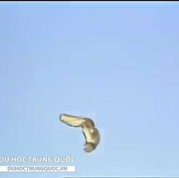 Tây Du Ký 1986.Tập 10: Ba lần đánh Bạch Cốt Tinh.